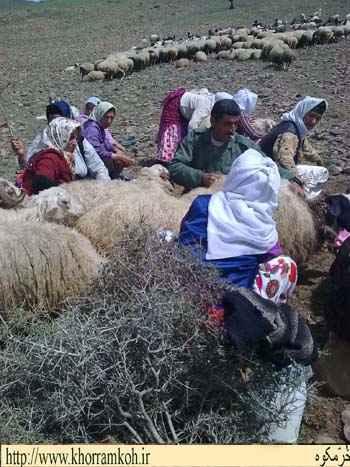شیردوشی در بره سر که با صدا کردن چوپان صاحب گوسفند آن را تحویل گرفته و می دوشد