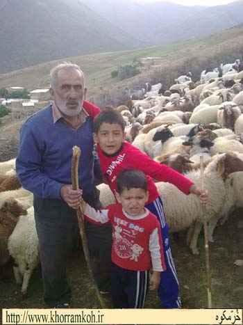 تصاویری از دامداری در روستای خرمکوه